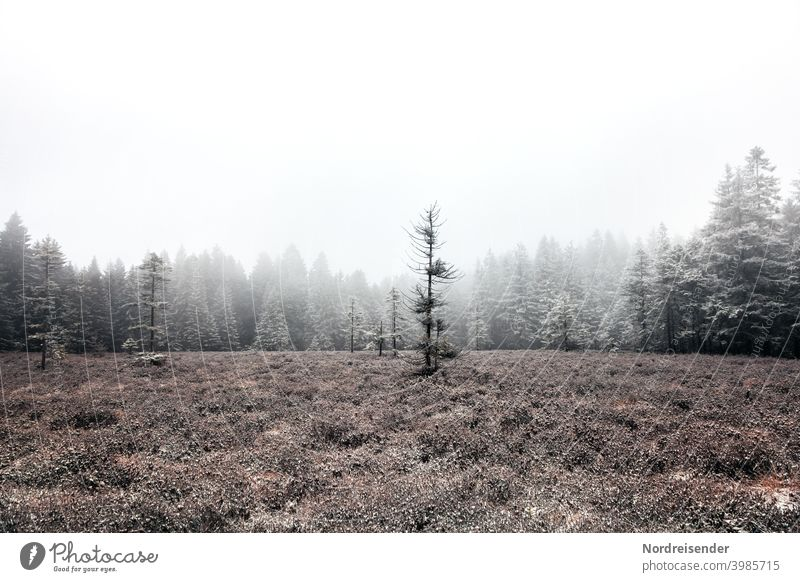 Schützenbergmoor in the Thuringian Forest with first snow and fog Copy Space top Thueringer Wald Loneliness Nature Landscape chill Deserted ecology Grass trees