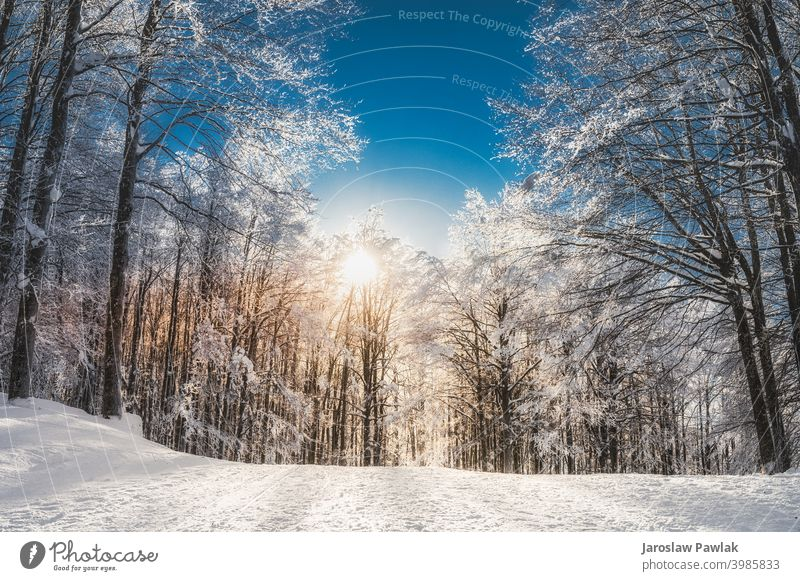 Sunny day in the mountains altitude wintertime trip climate snow nature ice outdoor travel landscape sky cold beautiful season forest snowy white frost tree fir