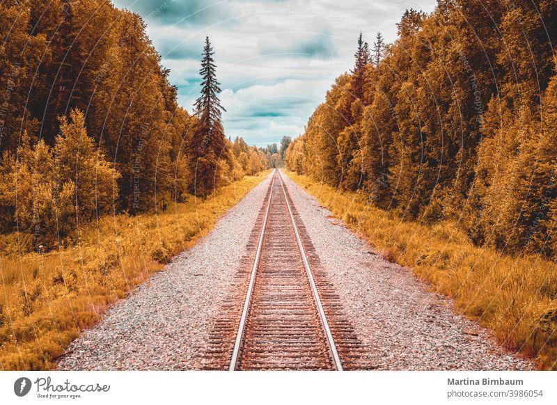 Straight forward, railtracks in the alaskan wilderness to Denali National Park rail track railroad railway scenic denali national park landscape travel blue