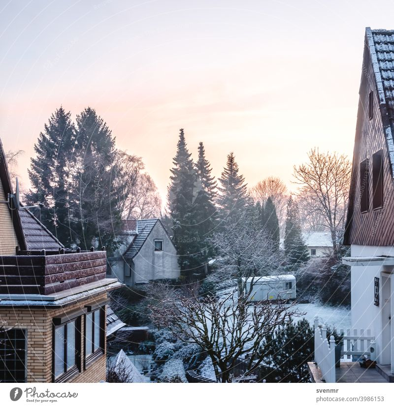 Winter sunrise with houses Frost View from a window Still Life Ice White Snowscape House (Residential Structure) Garden Winter's day Cold Winter mood Sunrise