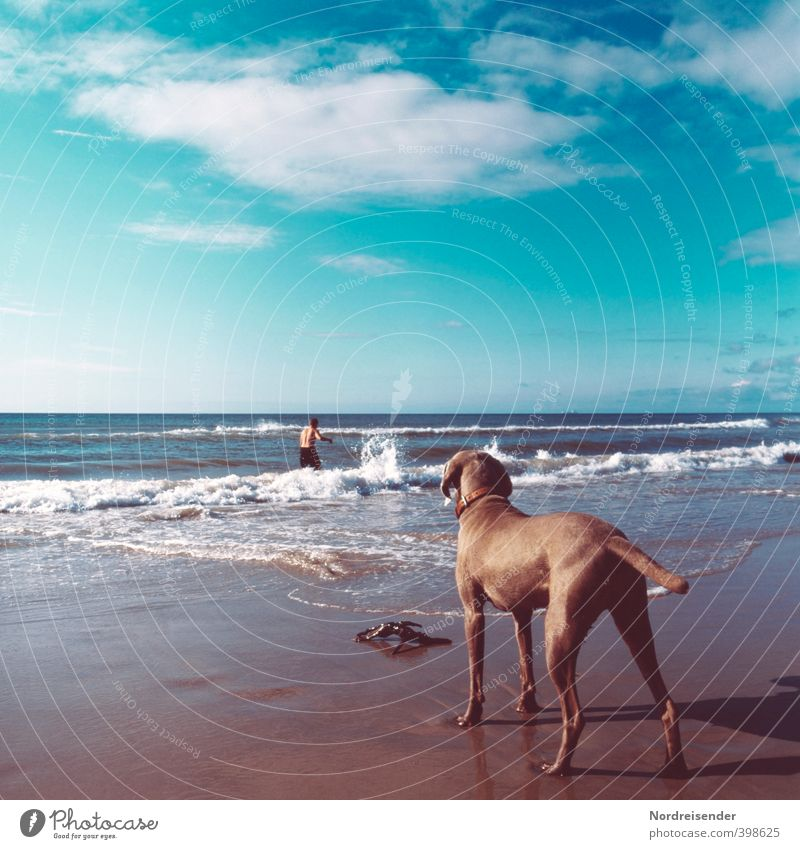 Dog Human being Sky Man Vacation & Travel Summer Colour Ocean Clouds Animal Beach Adults Far-off places Freedom Swimming & Bathing Waves