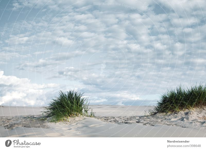 Sky Vacation & Travel Summer Plant Loneliness Landscape Calm Clouds Far-off places Life Grass Lanes & trails Freedom Sand Dream Climate