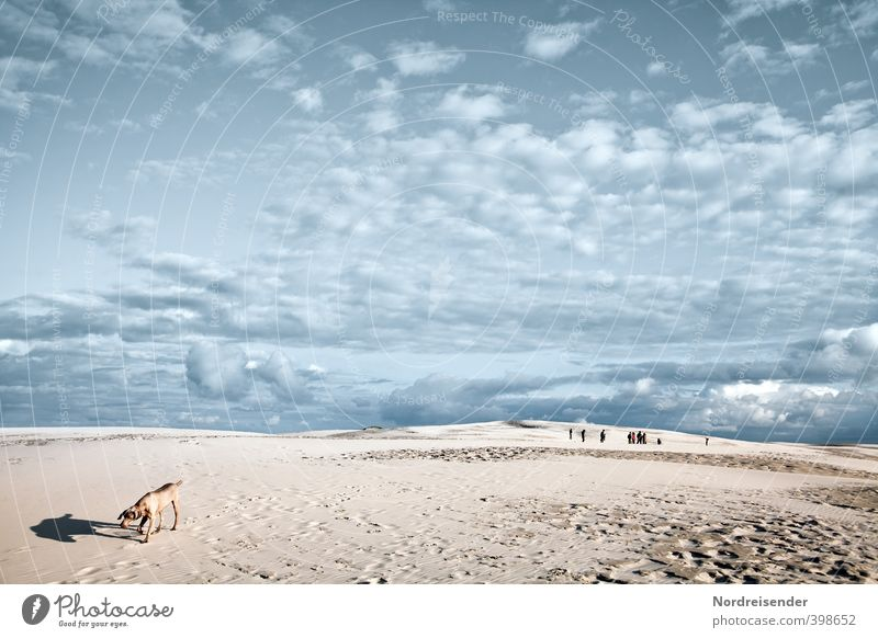 Dog Human being Sky Blue Summer Sun Loneliness Landscape Clouds Animal Far-off places Lanes & trails Sand Group Horizon Brown
