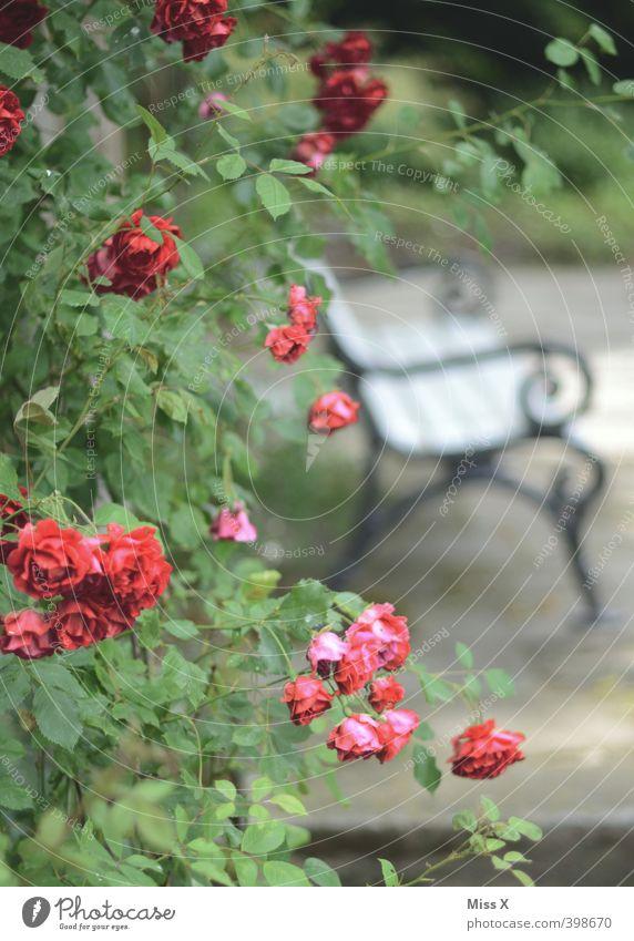 Pure Romanticism Living or residing Garden Rose Emotions Moody Love Love of animals Infatuation Romance Love affair Pleasure garden Park bench Meeting point