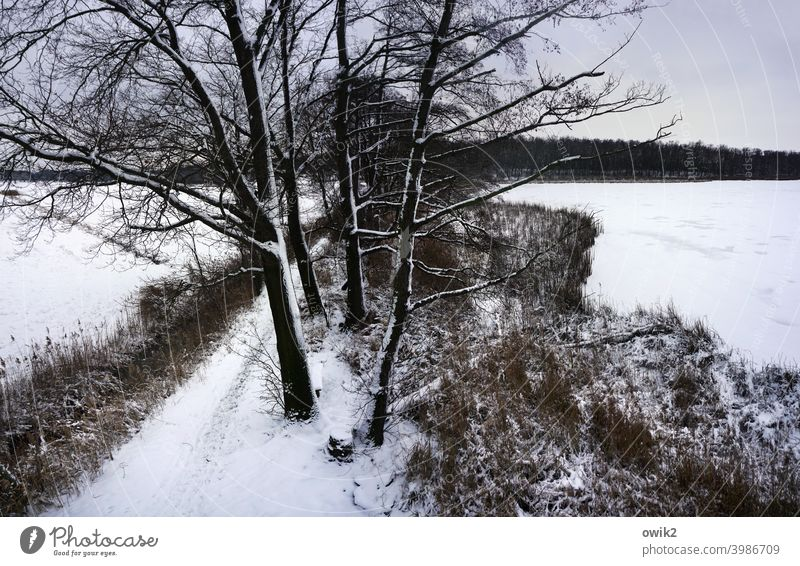 Winter from above Exterior shot Lausitz forest Peaceful trees Branches and twigs Bleak tranquillity melancholy Twigs and branches Deciduous tree Pond Tall