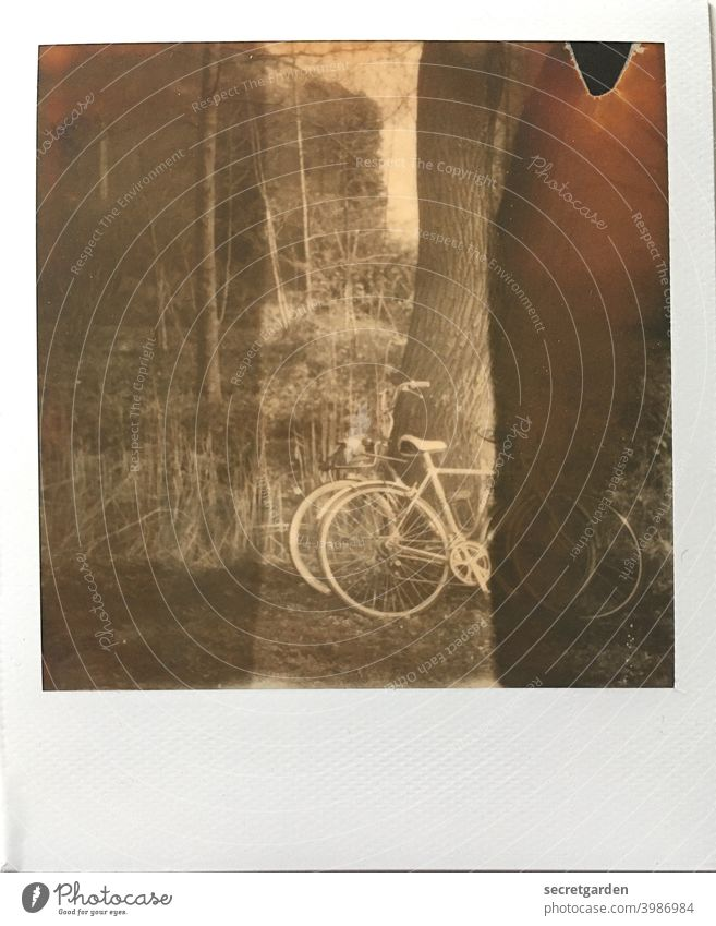 Romance is a bike ride together. And then off into the lake! romantic Bicycle Cycling Cycling tour Tree Lean Park Polaroid Analog Stripe Trip Exterior shot