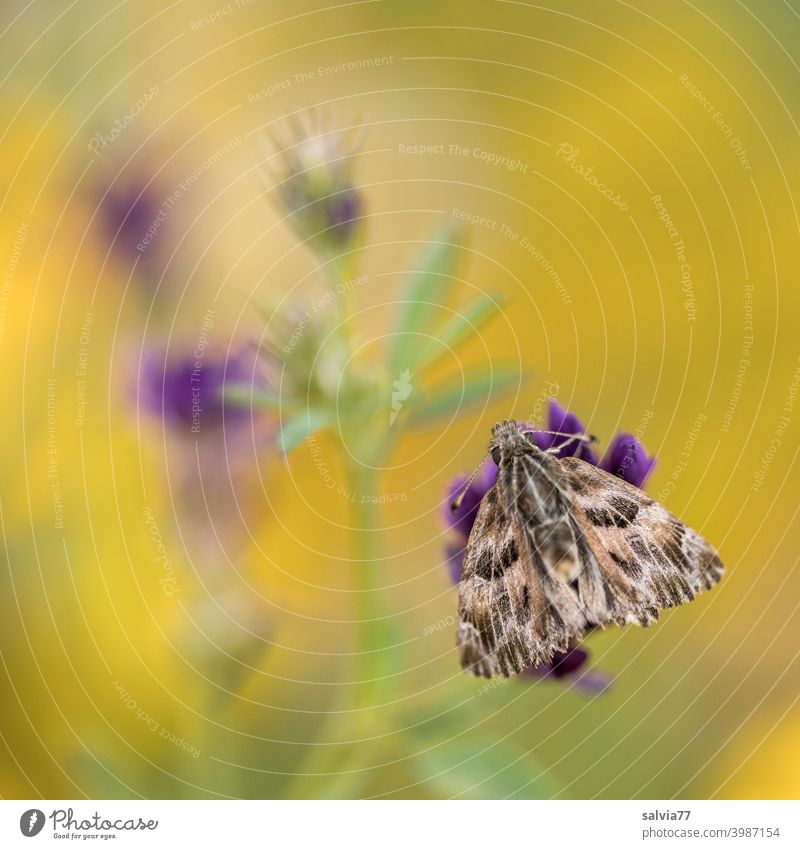 Flower meadow with butterfly Yellow Violet Butterfly Mauve Thicket Butterfly Nature Summer blossom Meadow Blossom Blossoming Mallow plants