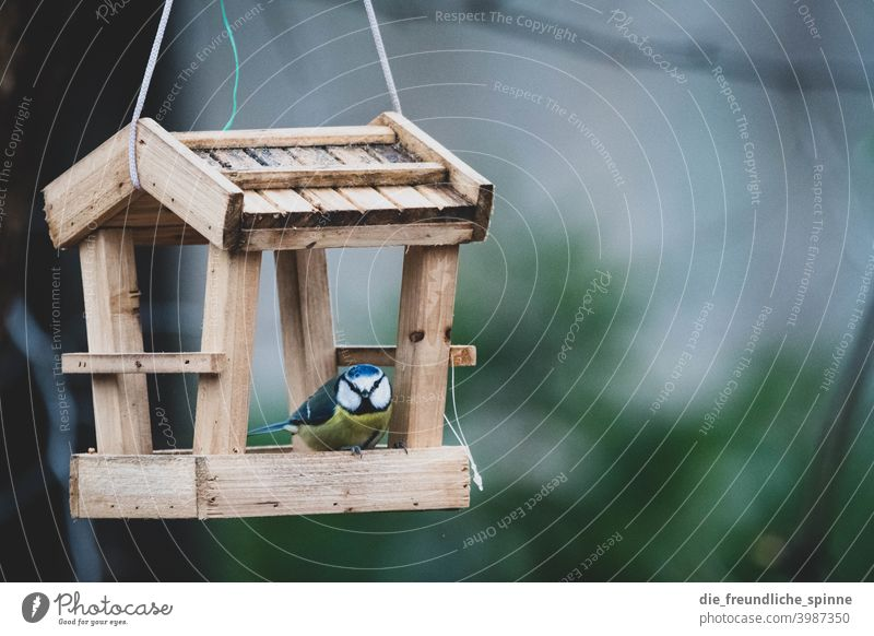 Blue Tit in Bird House Tit mouse tit Flying Yellow Spring Animal Exterior shot Nature Feather Garden Small Close-up Winter Beak Wild pretty animal world