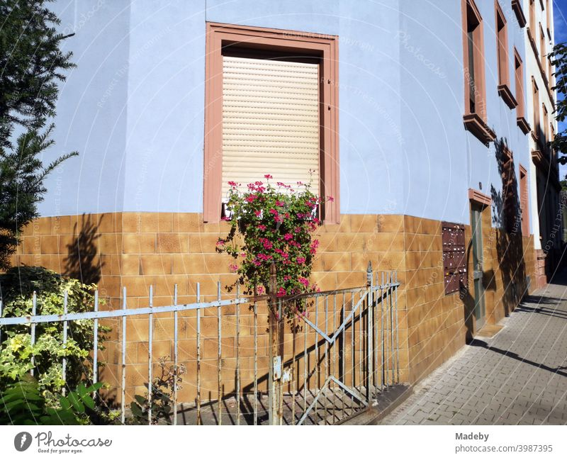 Old fence in front of a front garden with flower decorations in summer sunshine in front of a light blue facade in the north end of Frankfurt am Main in Hesse, Germany