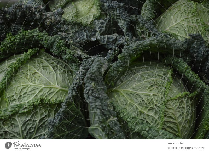 Here we have the salad [or rather savoy cabbage]. Savoy cabbage Cabbage Green green stuff vegetarian salubriously food Eating Nutrition Vegetable