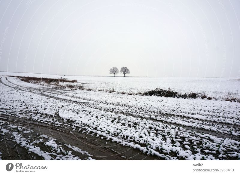 cold plaice White Sparse Beautiful weather Winter mood Snowscape Environment Nature Far-off places Tree Cold Landscape Horizon trees acre wide Deserted chill