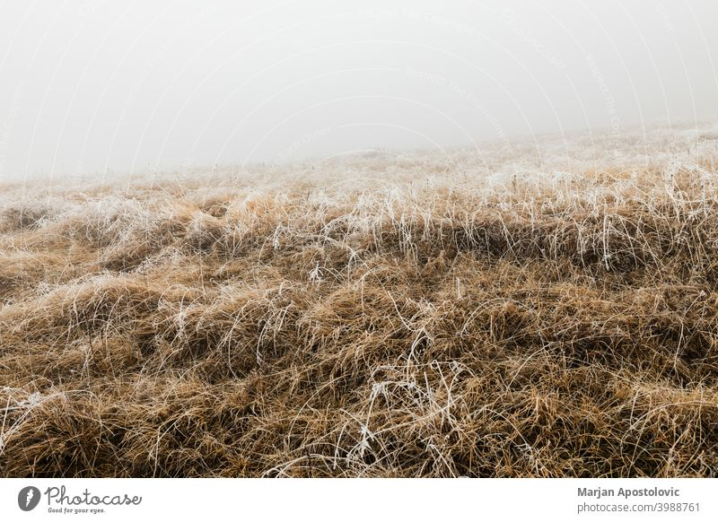 Frosted grass on a foggy winter morning in the mountains background beautiful brown cold countryside covered dawn environment field frost frosted frosty frozen