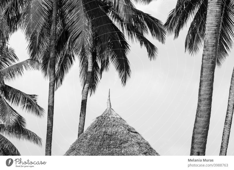 Straw roof close-up under palm trees, black and white photo. Detail of hut in paradise resort. Tropical holidays, tropical climate. abstract architecture