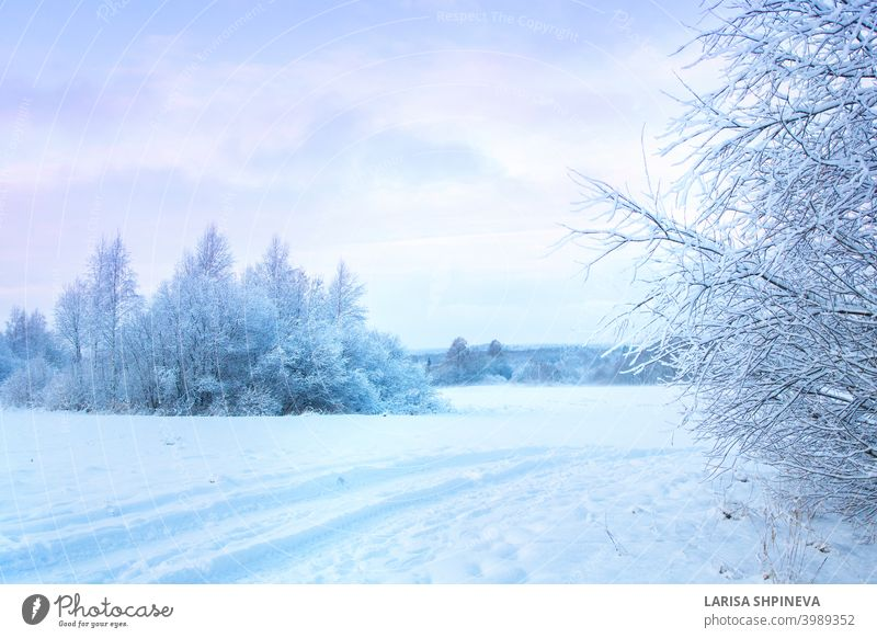 Beautiful winter landscape with field of white snow and forest on horizon on sunny frosty day. nature background outdoor tree season cold beautiful ice sky