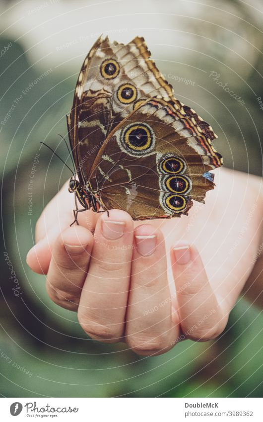 A butterfly sits on a hand Butterfly Butterfly house Grand piano Close-up Animal Colour photo Subdued colour Day Macro (Extreme close-up) Exterior shot
