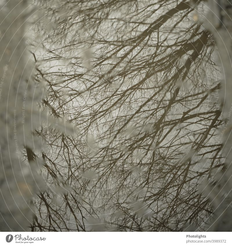 Branches reflected in puddle standstill Rest Plant Bushes Water reflection water surface smooth water surface Branched ramified twigs branches Tree
