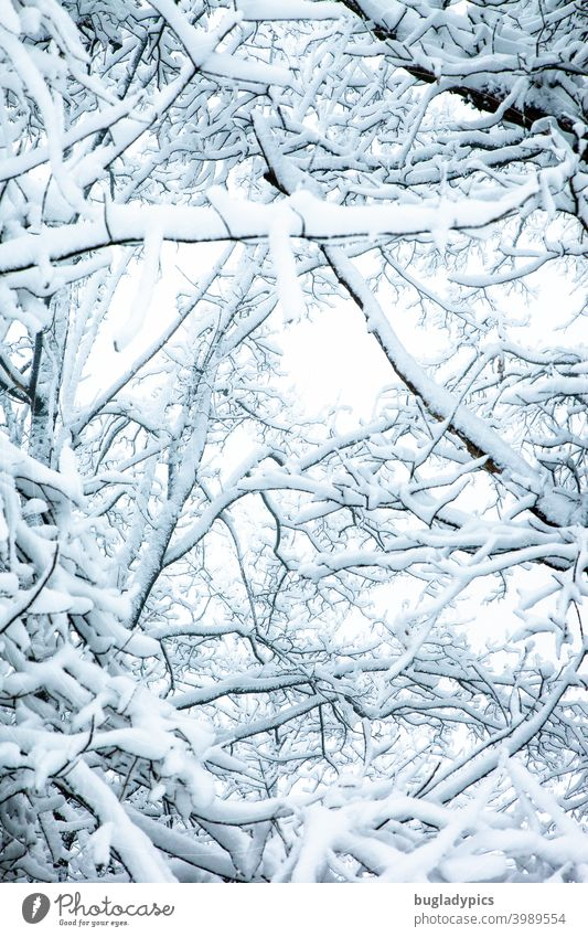 Heavily loaded branches Branches and twigs trees Snow snow-covered snow loading Twigs and branches Tree Winter Winter forest Above Upward White Cold Frost