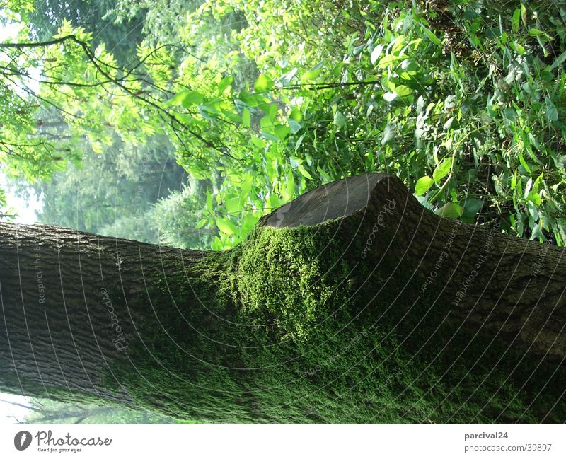 Nature Tree Green Summer Leaf Landscape Tree trunk