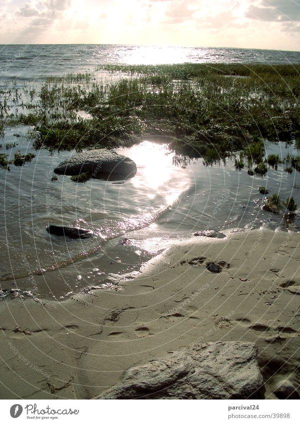Emmerlev Beach Ocean Aquatic plant Reflection Light Water Sand Stone Plant Sun