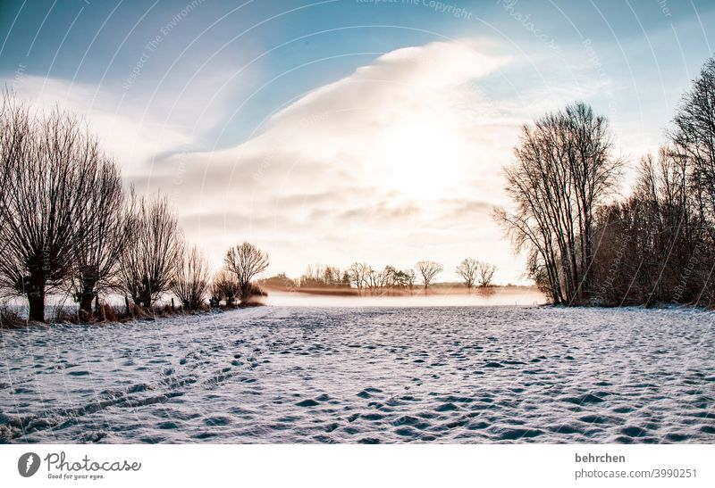 winter morning Colour photo Calm Environment Landscape Sky Freeze Frozen Hoar frost Seasons Frost Nature Meadow Field trees silent Weather Deserted Tree Idyll