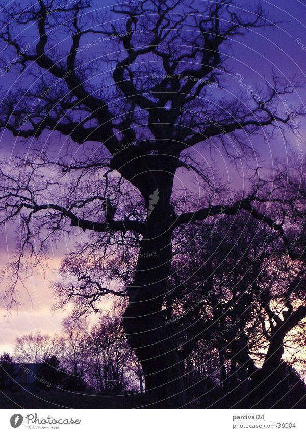 Jenisch Park Sunset Tree Light Moody Sky Nature Landscape