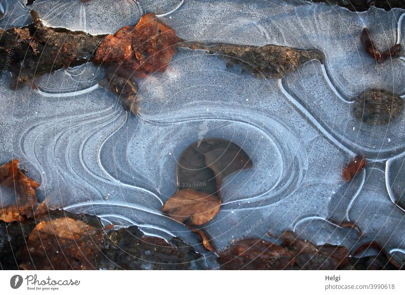Ice structures with withered leaves on a puddle Frost chill Winter Puddle Leaf Limp Shriveled Pattern Ice sheet Cold Frozen Nature Deserted Exterior shot