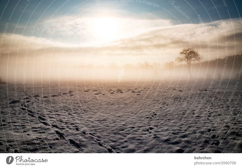 search for clues Colour photo pretty Dreamily idyllically Snow layer Winter mood Winter's day Winter walk Snowscape Home country Fabulous Mysterious Hoar frost