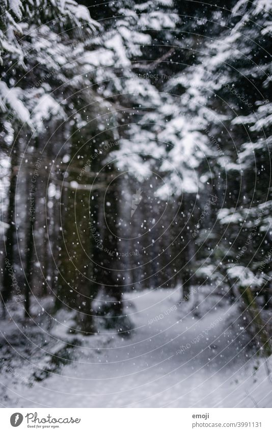 Snowflakes in the forest in winter Winter Gray Gloomy White Cold chill somber Forest Tree snowflakes bokeh Snowfall blurred blurriness focus