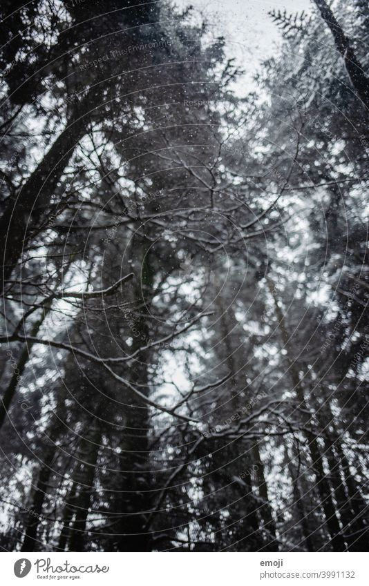 Snowflakes in the forest in winter Winter Gray Gloomy White Cold chill somber Forest Tree snowflakes bokeh Snowfall Rain