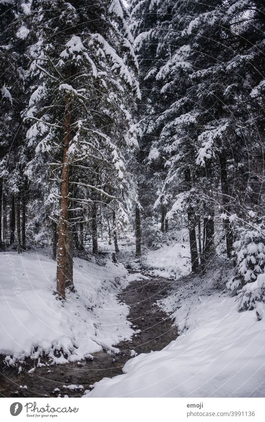 Stream in the forest in winter with snow Winter Snow Gray Gloomy White Cold chill somber Forest Tree Brook