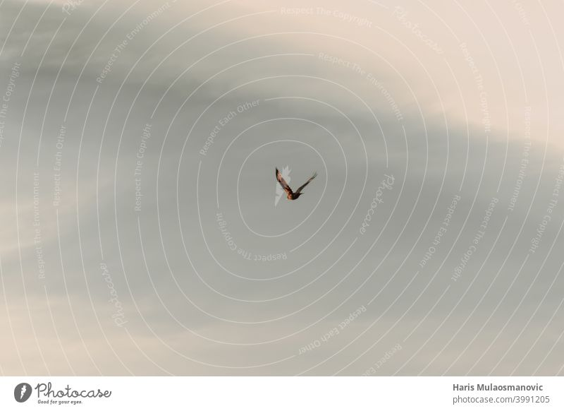 bird flying on the sky, freedom animal background beautiful blue cloud clouds flight gull moody natural nature outdoor sea seagull silhouette summer water white