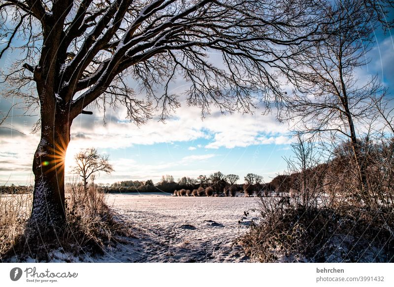 favourite piece of home Colour photo pretty Dreamily idyllically Snow layer Snowscape Winter walk Winter's day Winter mood Home country Fabulous acre