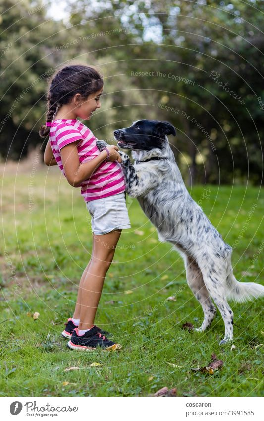 Young girl with a border collie on a field activity animal background beautiful blond caucasian caucasian girl child childhood children cute dog family female