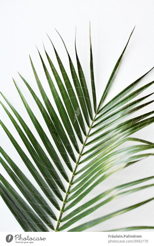 Plant against white background floral Botany Nature Green Decoration Isolated Image Delicate Palm tree Fern Leaf Caribbean