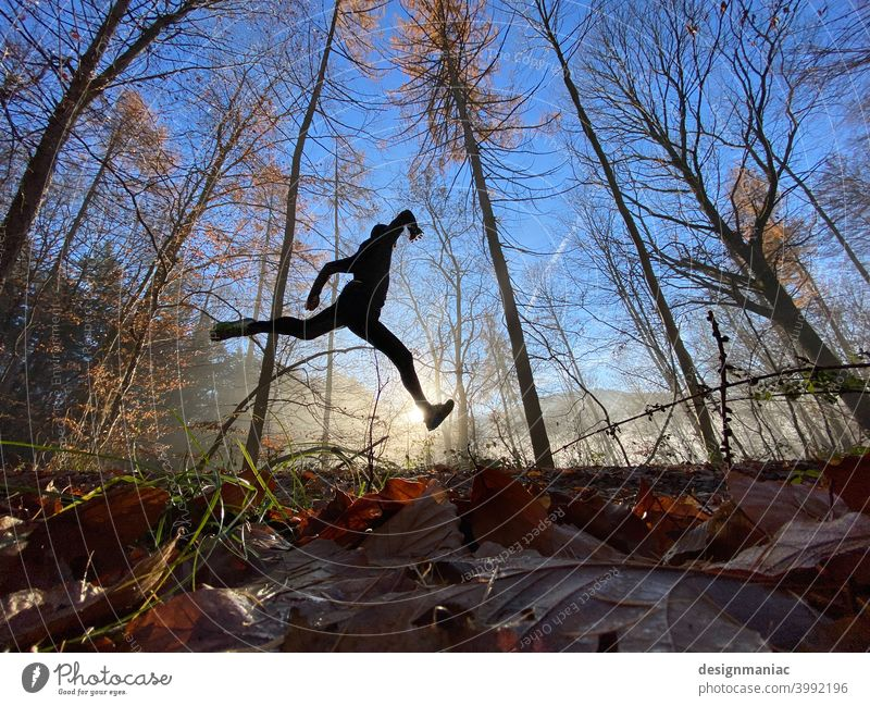 Jump into the 80s Silhouette Fog Clouds Amazing Mystic trees Lanes & trails Grass Cold cold season Sky Sky blue cloudy cloudy sky Shroud of fog Misty atmosphere