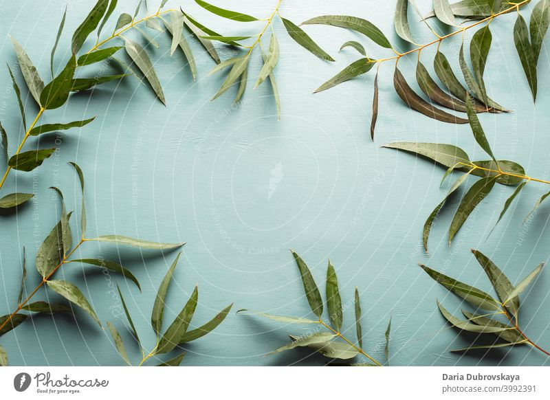 Floral background. Frame made of eucalyptus branches foliage flower green composition summer frame floral tropical leaf nature table wedding design flat top
