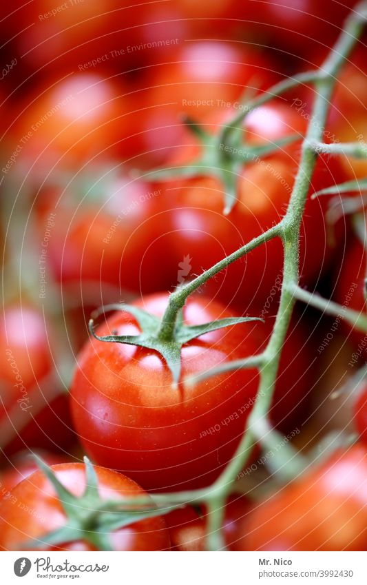 tomatoes Tomato Vegetable Food Fresh Red Healthy Nutrition Vegetarian diet Organic produce Delicious Healthy Eating naturally Appetite Plant Juicy cherry tomato