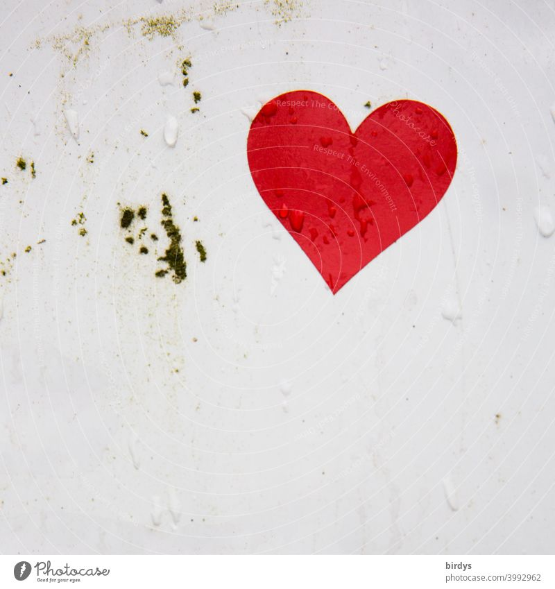 red heart on white background with water drops. watering heart Heart Drops of water Love Infatuation Wet Romance Emotions Red valentine White heart-shaped
