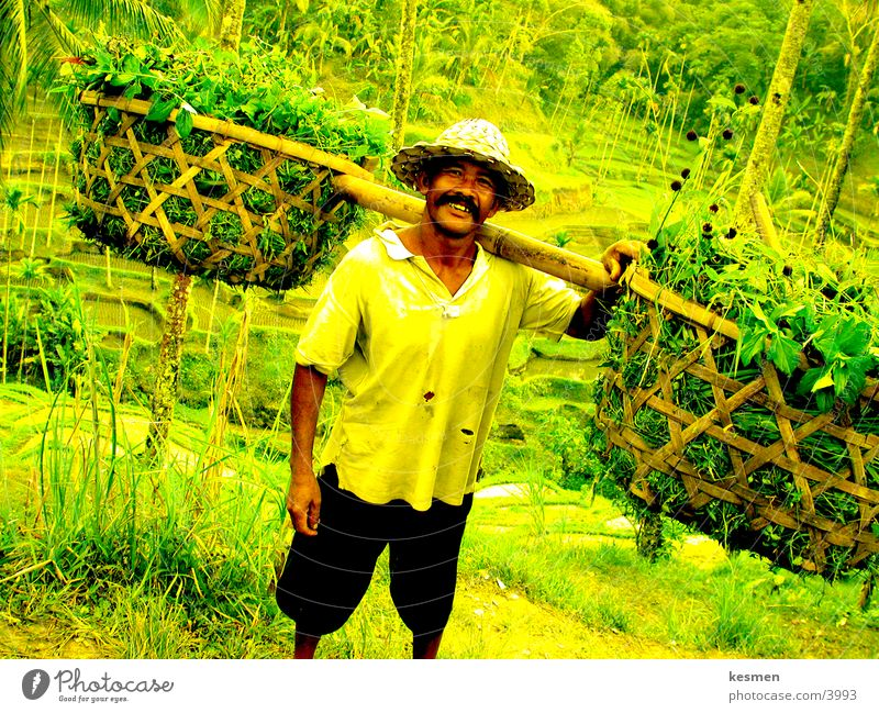 Human being Farmer Rice farmer
