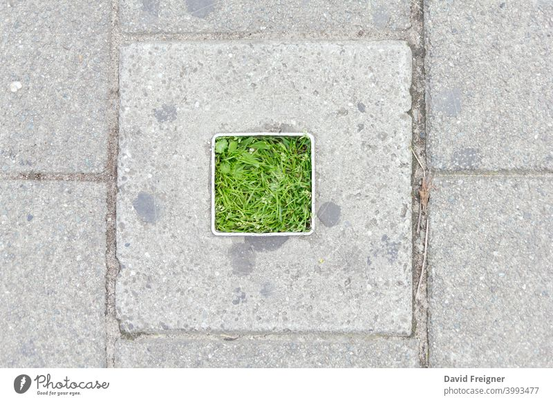 Concrete square vegetation green urban plant summer outdoors relax rest city grass lawn spring background environment season natural meadow field scene lush
