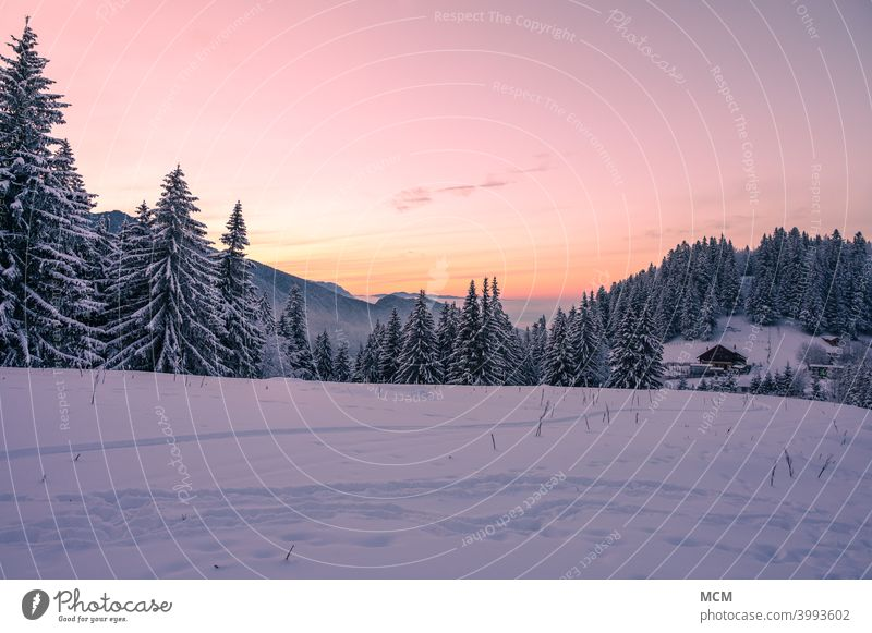 View over snowy mountain landscape in the Romanian Carpathians in winter winter landscape Snow Snowscape evening mood evening light Hut Nature Hiking Forest