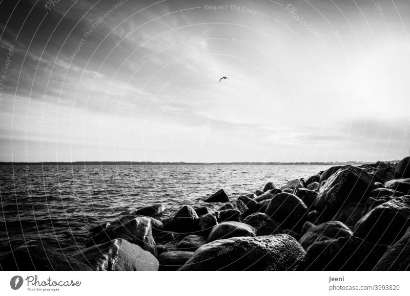Coastal protection made of rocks at the Baltic Sea coast coastline coastal protection Baltic coast Baltic beach Beach Water Ocean coastal strip Gale