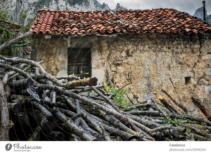 Conformity | Wood in front of the hut Architecture Manmade structures House (Residential Structure) stone house Hut door Roof Roofing tile roof tiles Stone