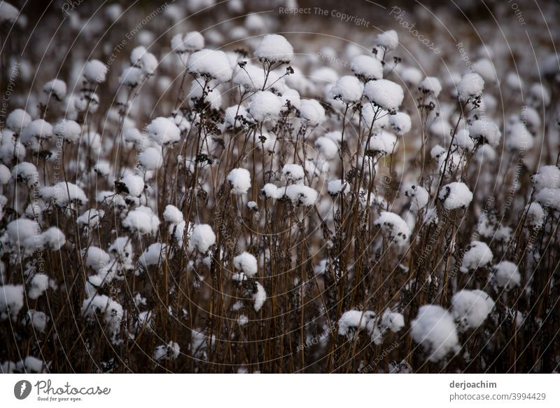 Snowflakes lay on the withered stems. - Is not cotton ! - snowflakes Cold Winter White Snowfall winter Deserted Nature Weather Exterior shot Winter's day
