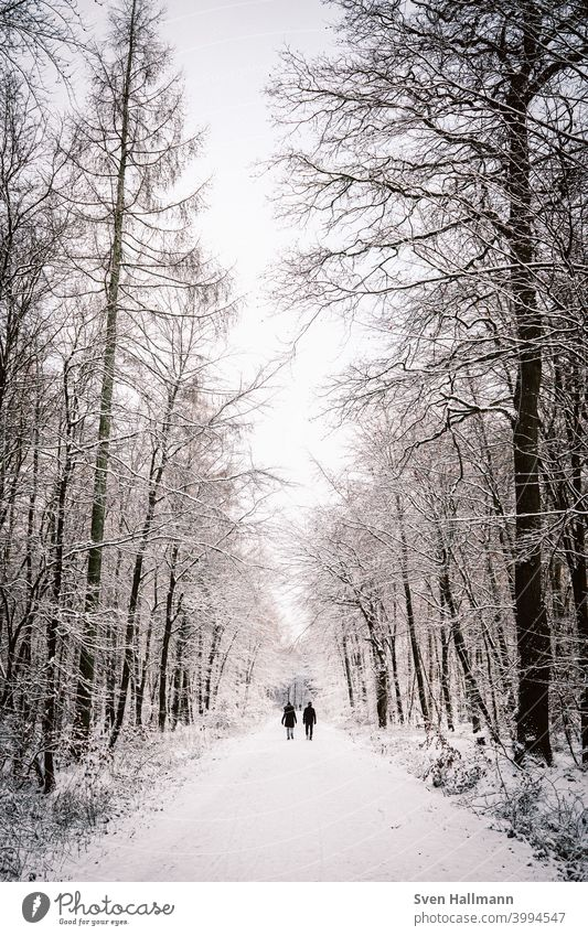 Couple walking through snowy forest Happy Man Woman Relationship Together couple Lovers Trust Affection Harmonious Husband Wife Forest Tree Nature Deserted