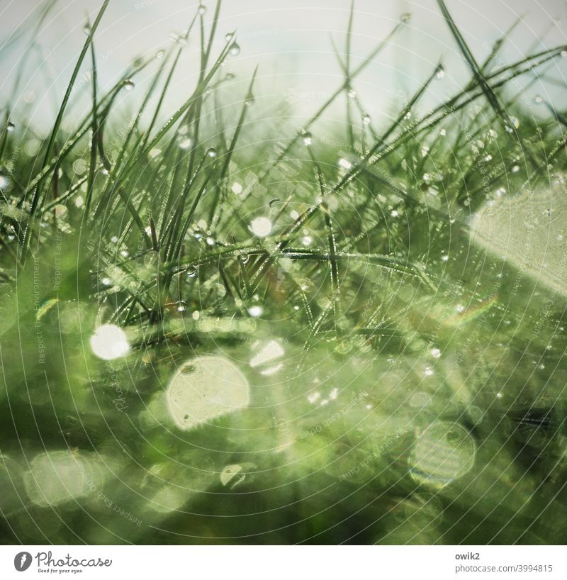 Wet carpet Meadow Close-up whirr morning light Fresh Near Hazy detail Colour photo Rain Plant Back-light Detail Water Blade of grass Deserted Small Spring hazy