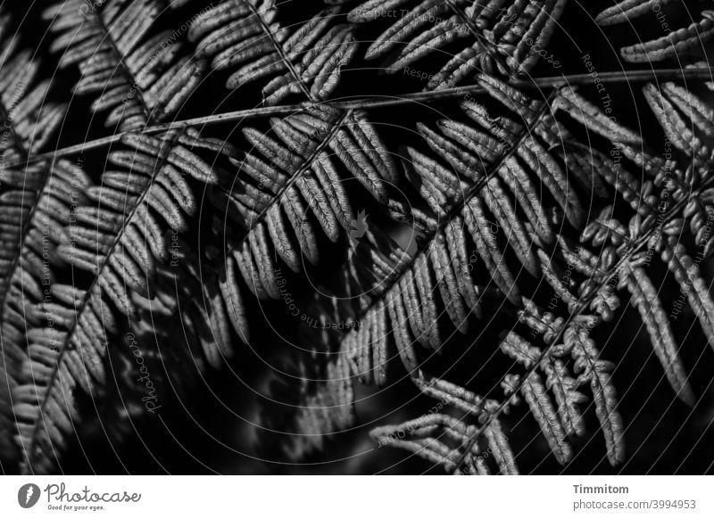 fern frond Fern Nature Plant Deserted Black & white photo Dark shine