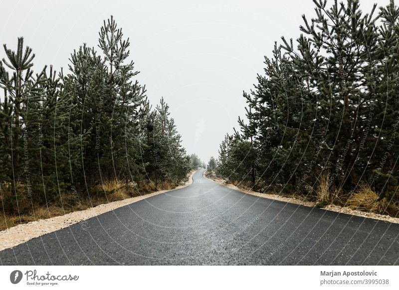 Empty mountain road in autumn overcast day asphalt country countryside drive driveway empty environment europe evergreen foliage forest forestry journey