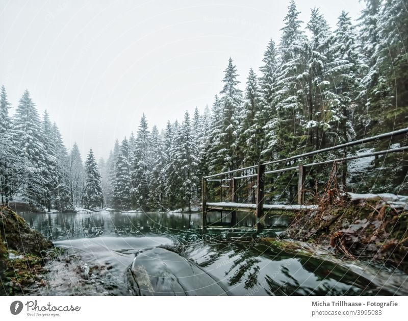 Forest lake in winter Pfanntalsteich oberhof Thuringia Thueringer Wald Lake Water Winter Snow Footbridge trees rail Reflections Nature Landscape Idyll