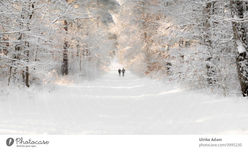 Winter in the fairy tale forest near Worpswede - couple walking hand in hand through a forest covered with snow Couple Snow To go for a walk Romance Love